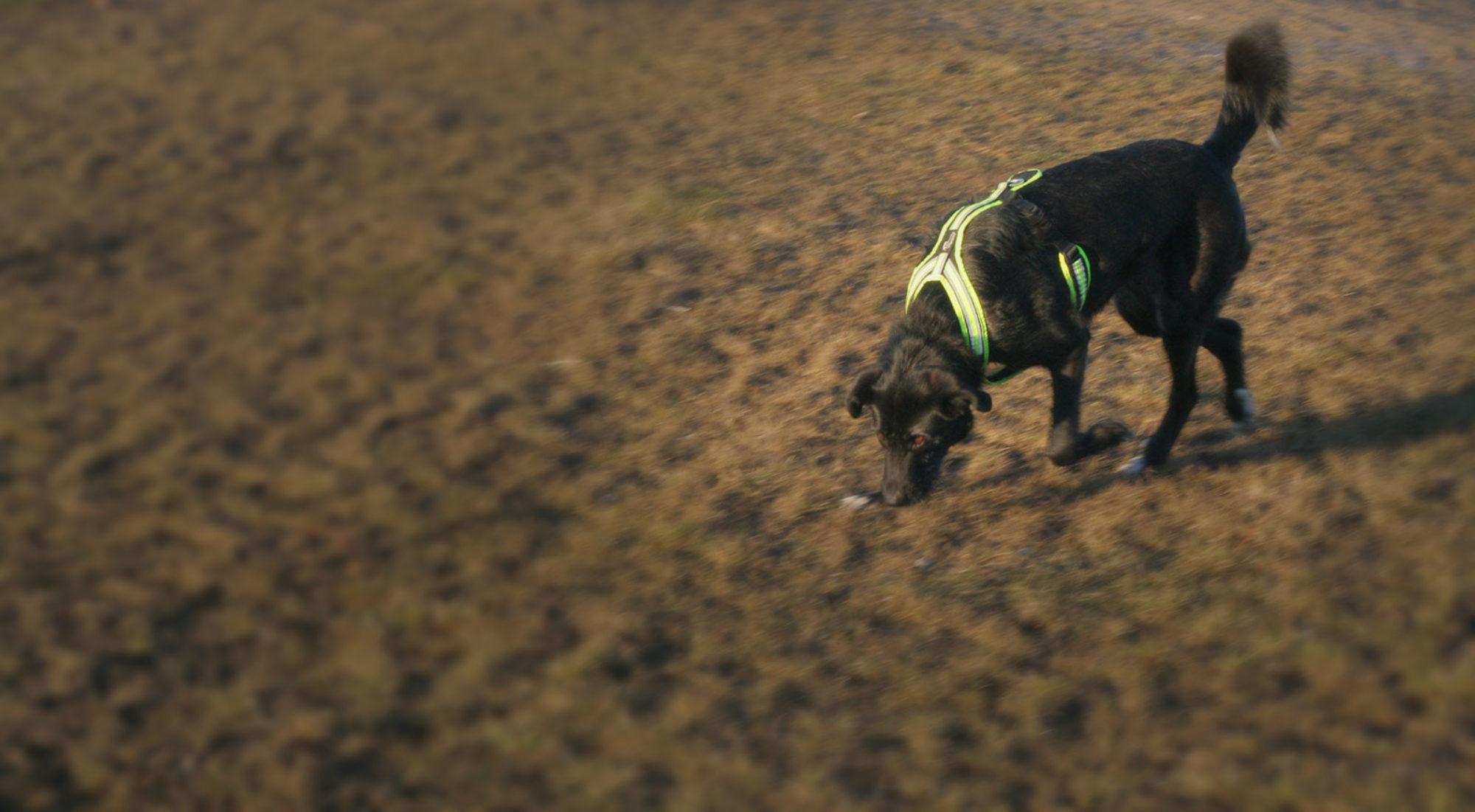 Wildlife Detection Dogs e.V.